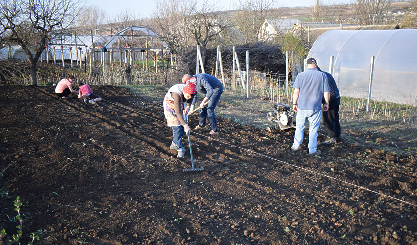 Sowing vegetable seed in the Ghidion family garden.
